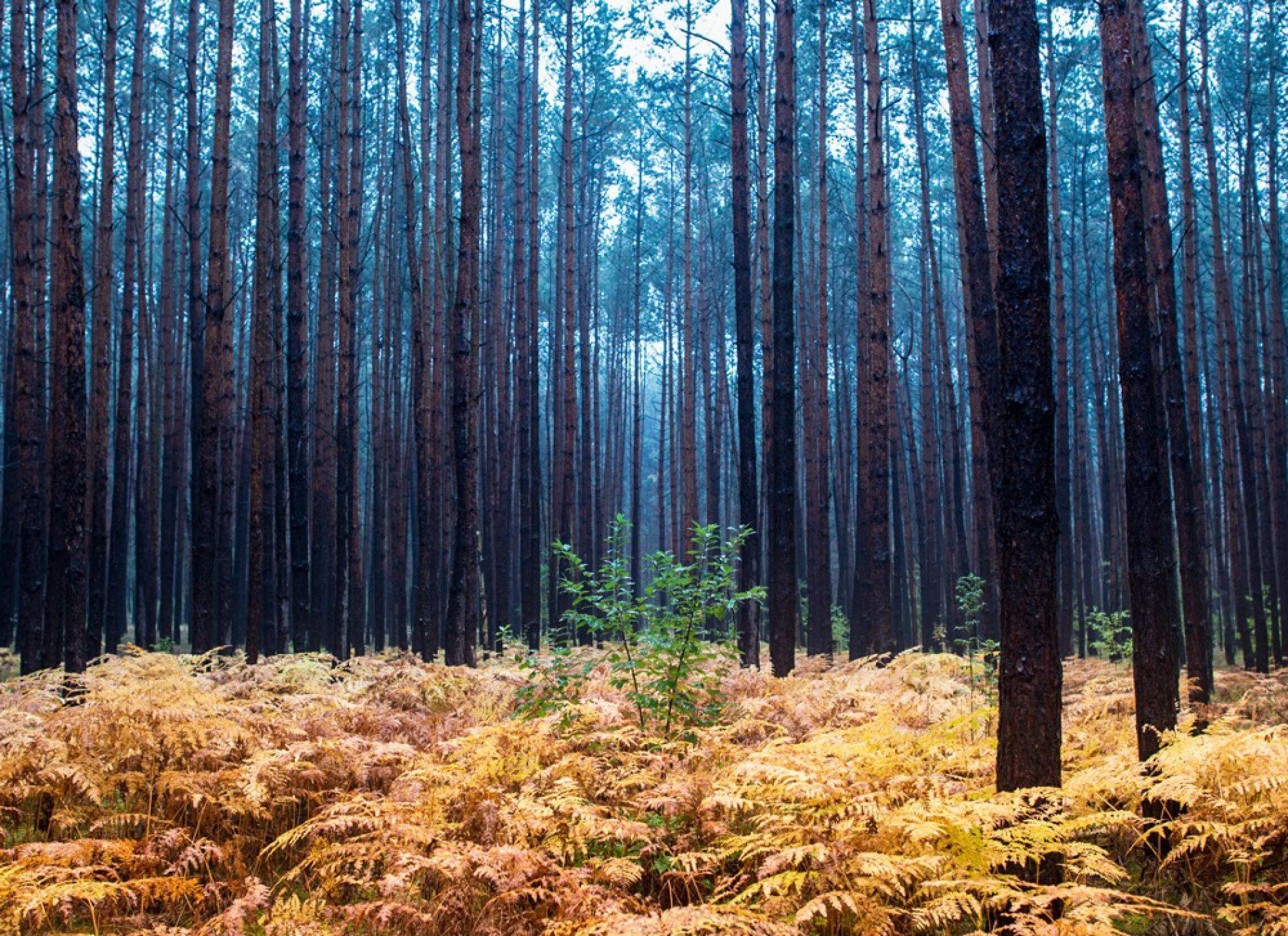 Nuovi bandi per boschi e foreste