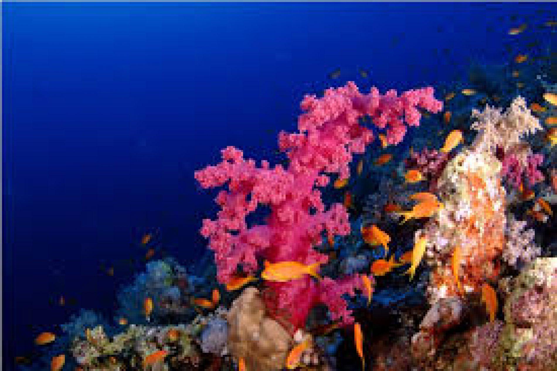 Nuove professioni: restauratori di habitat marini